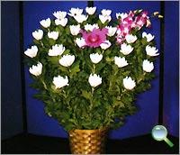 お供え花4